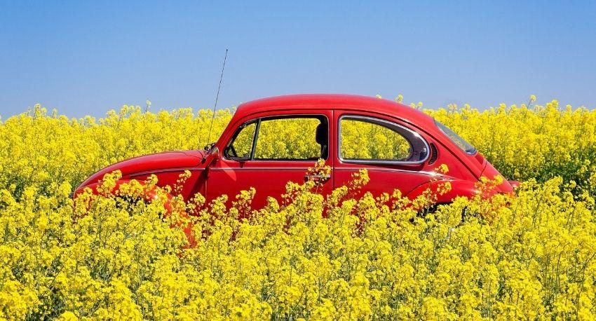 Volkswagen-in-landscape